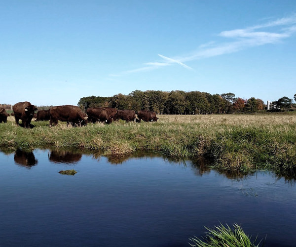 Grand View Bison Ranch Wisconsin
