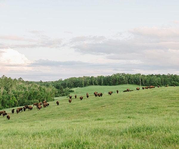 THB Grasslands Wisconsin